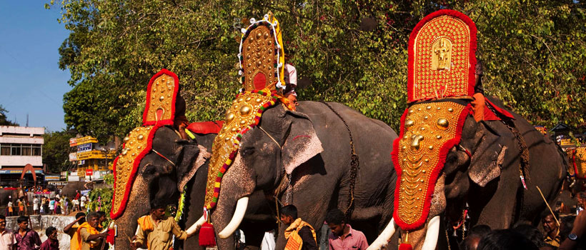 Elephants are getting ready for the Adoor Gajamela in Parthasarathy Temple