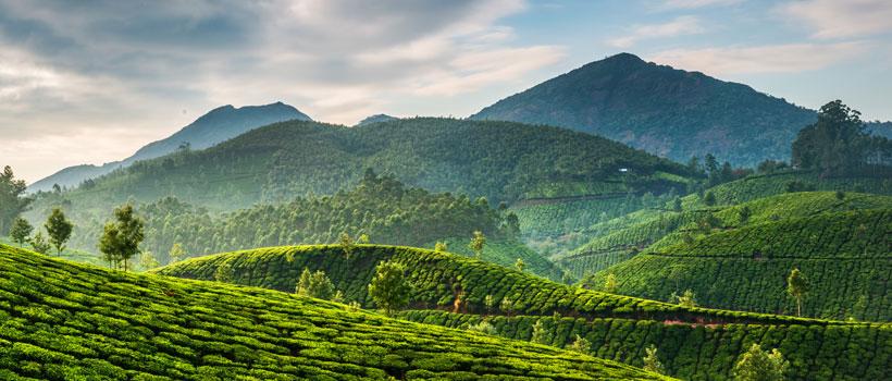 An amazing view of Munnar Tea estate in Munnar hills