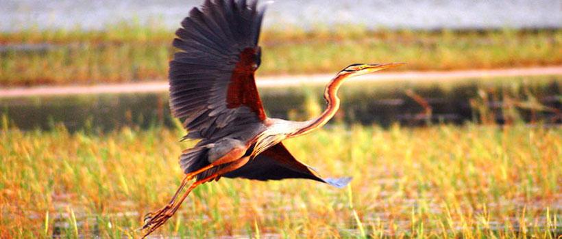A bird flying in the Thattekad Bird Sanctuary