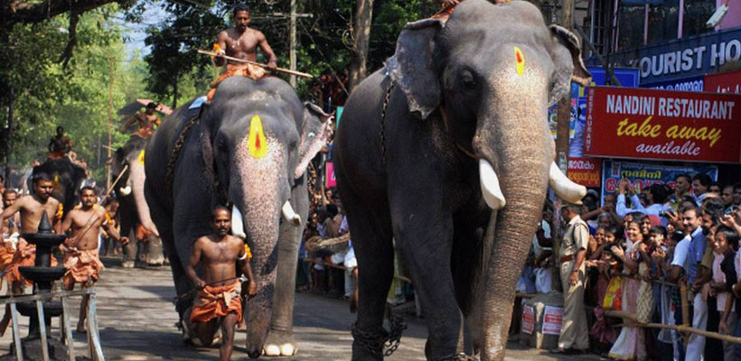 Elephants in Guruvayur Aanayottam