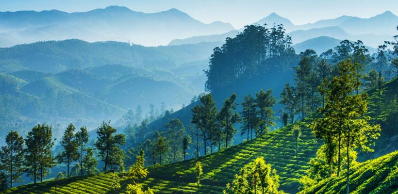 Green tea plantations in the mountains of Munnar, Kerala, India
