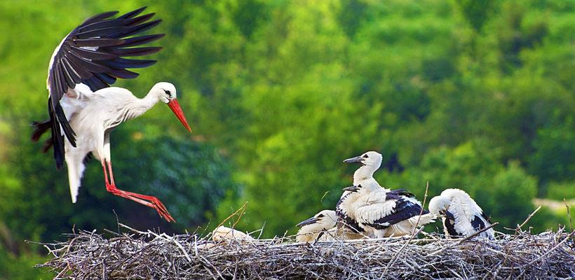 Thattekad bird sanctuary in Kerala