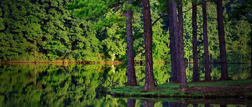 A glimpse of Vagamon pine forest