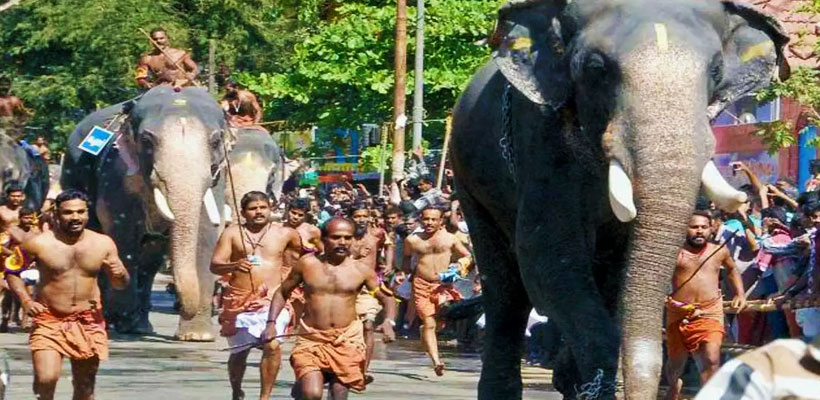 A picture of giant tuskers participating and running in Guruvayur Anayottam (elephant race).