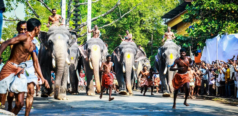 A glimpse of Guruvayur Anayottam (elephant race)