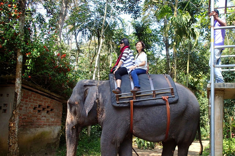 two-elephant-ride