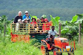 munnar-tea-plantation-kerala