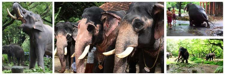 elephant-camp