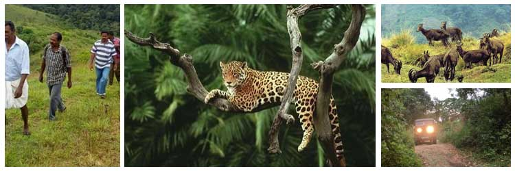 idukki-wildlife-sanctuary