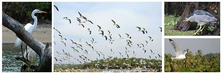 kadalundi-bird-sanctuary