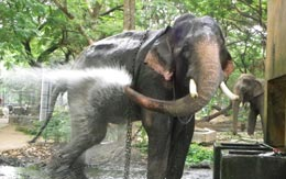 kodanad-elephant-training-centre
