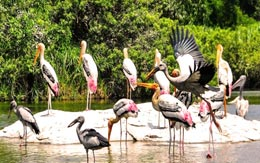 mangalavanam-bird-sanctuary
