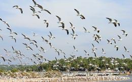 kadalundi-bird-sanctuary-kozhikode