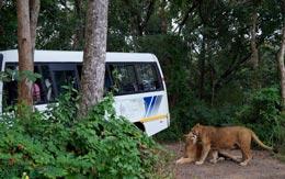 lions-park