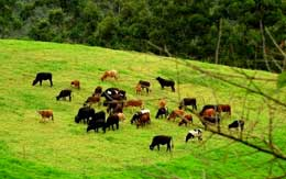 indo-swiss-dairy-farm-munnar