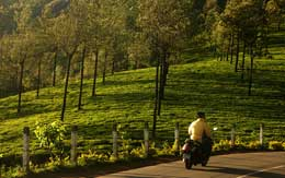 photo-point-munnar