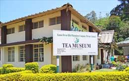 tea-munnar