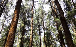 pine-forest-vagamon