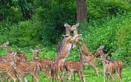 muthanga-wildlife-sanctuary-wayanad