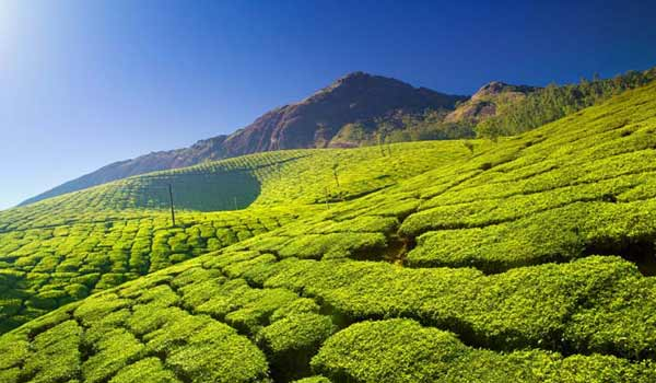 munnar-tourpackages